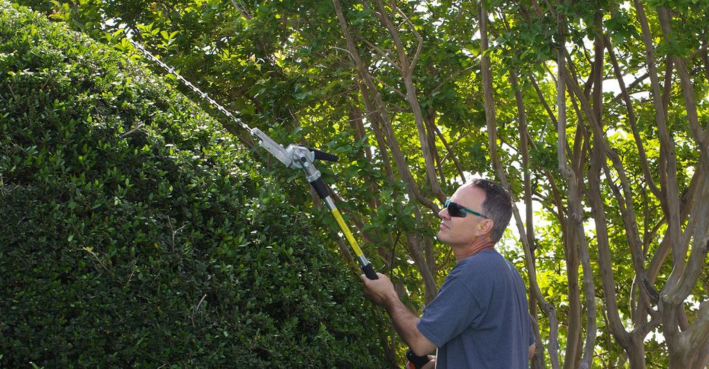 A hedge trimming professional in Pflugerville, TX