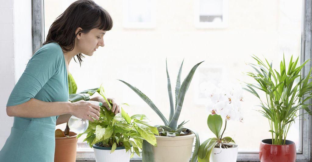 Find a plant caretaker near you