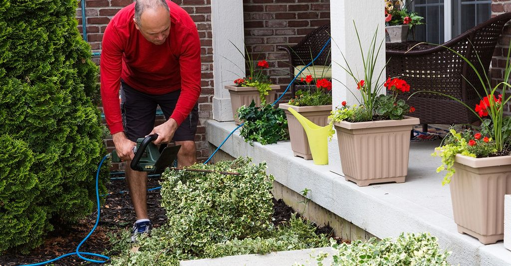 Find a shrub remover near Bellevue, WA