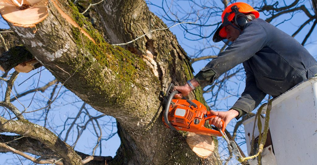 A tree removal service in Morton, IL