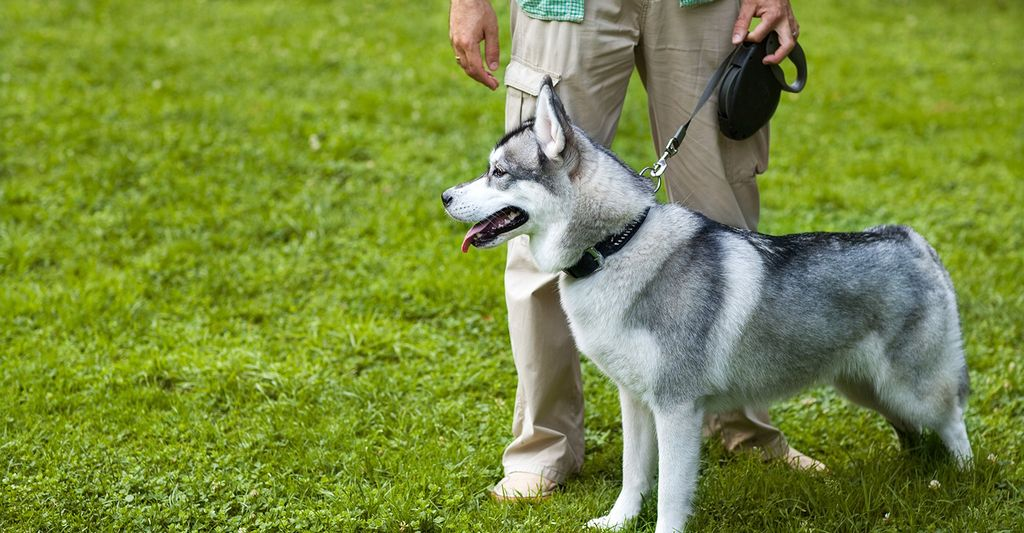 Find a dog trainer near you