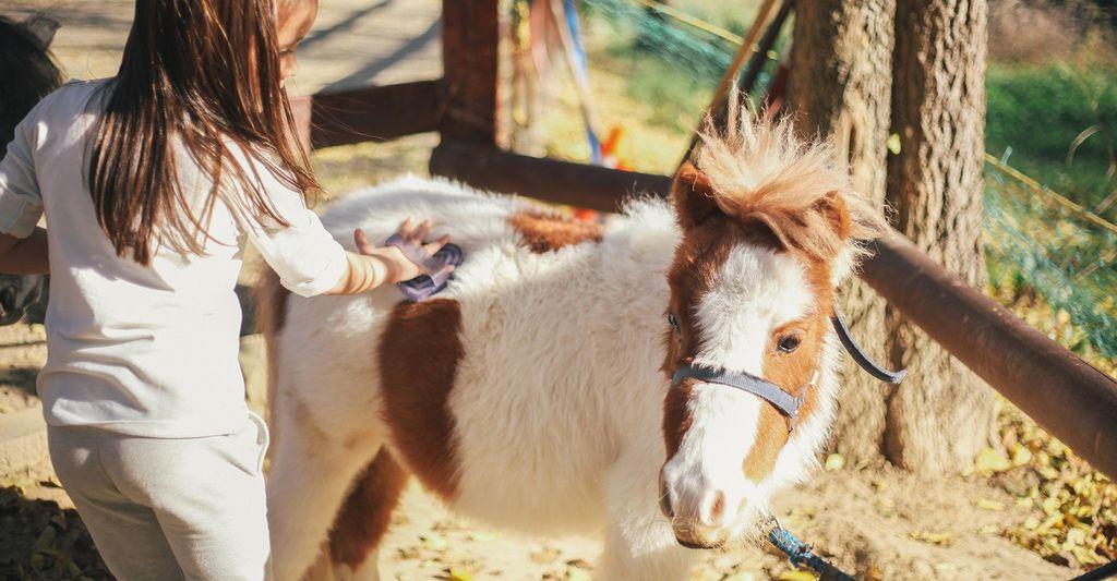 Find a Pony Ride Professional near Boynton Beach, FL