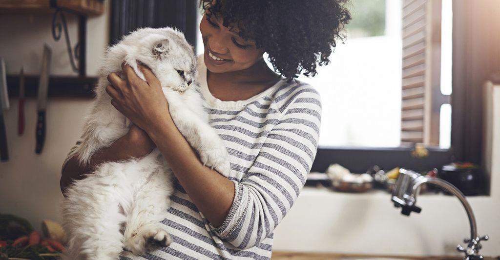 Find a cat sitter near Atlanta, GA