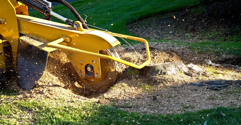 A stump grinding professional in Denver, CO
