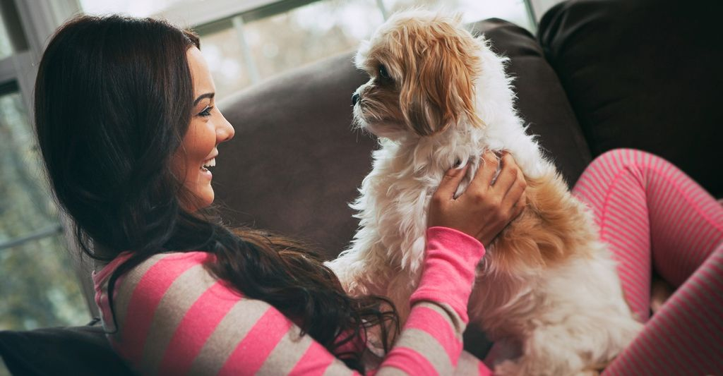 Find a professional pet sitter near you