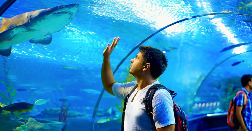 Find an Aquarium Professional near Miami Gardens, FL