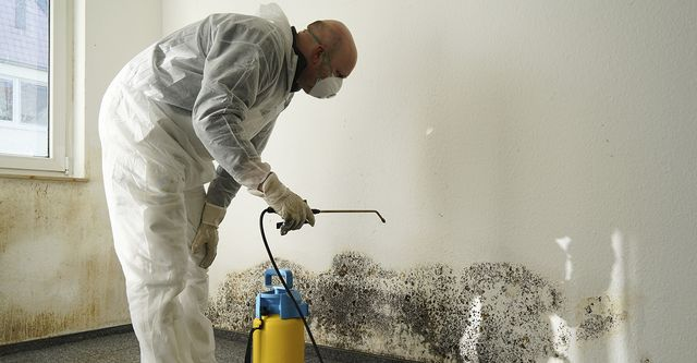 Mold inspection expert