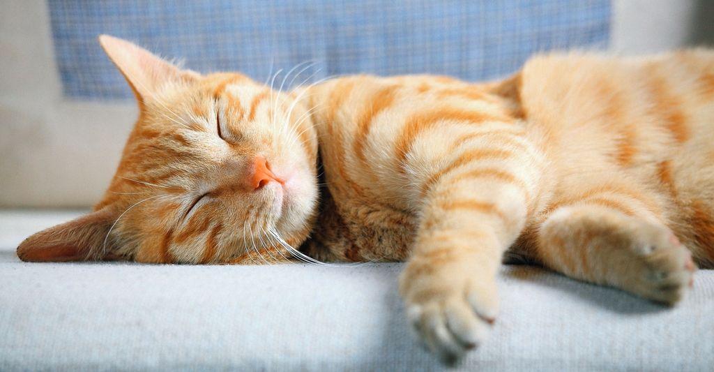 Find a cat boarding service near you