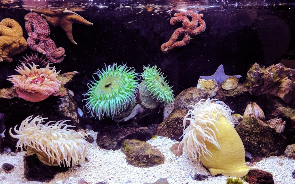 Saltwater aquarium setup cost