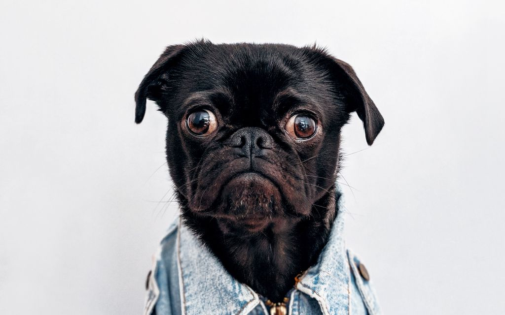 Pet photography prices