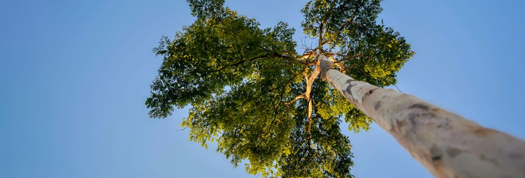 Find a tree trimming professional near Lake Oswego, OR