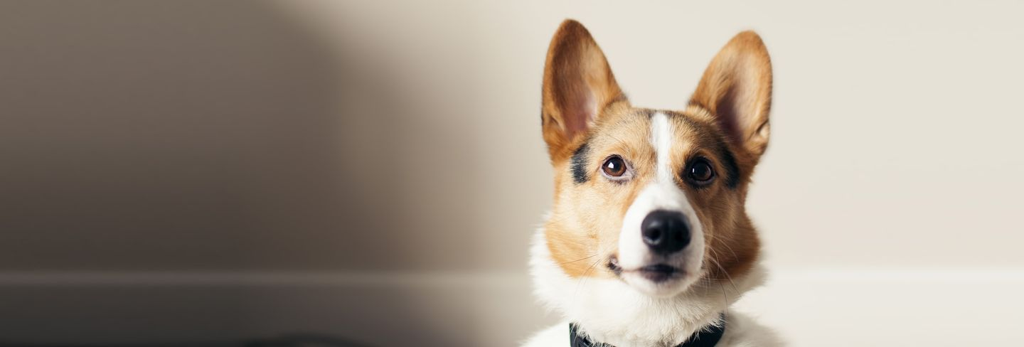 The 10 Best Mobile Dog Groomers Near Me With Free Estimates