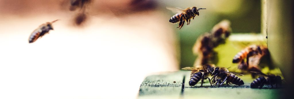 Find a bee remover near North Tonawanda, NY
