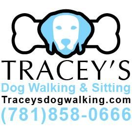 Avatar for Tracey's Dog Walking & Sitting Medford, MA Thumbtack