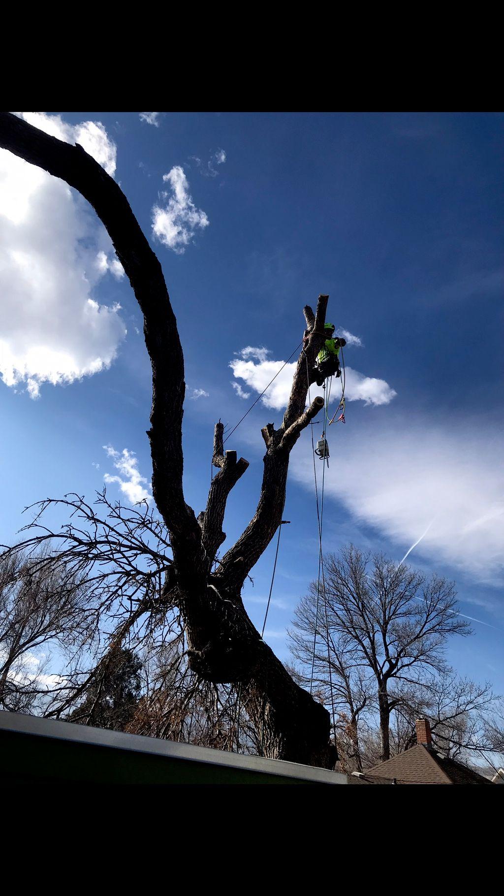Lumberjack Tree Services