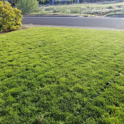 Avatar for Emerald Earth Lawn Care Services Central Point, OR Thumbtack