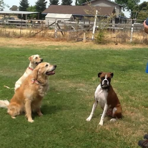 handling more than one dog all off leash is where u see true training applied