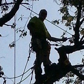 TLC Tree Services