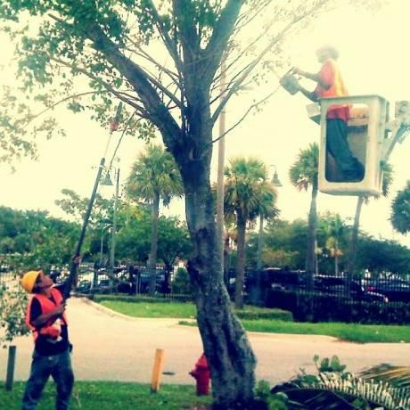 Big Dawg's Tree Service