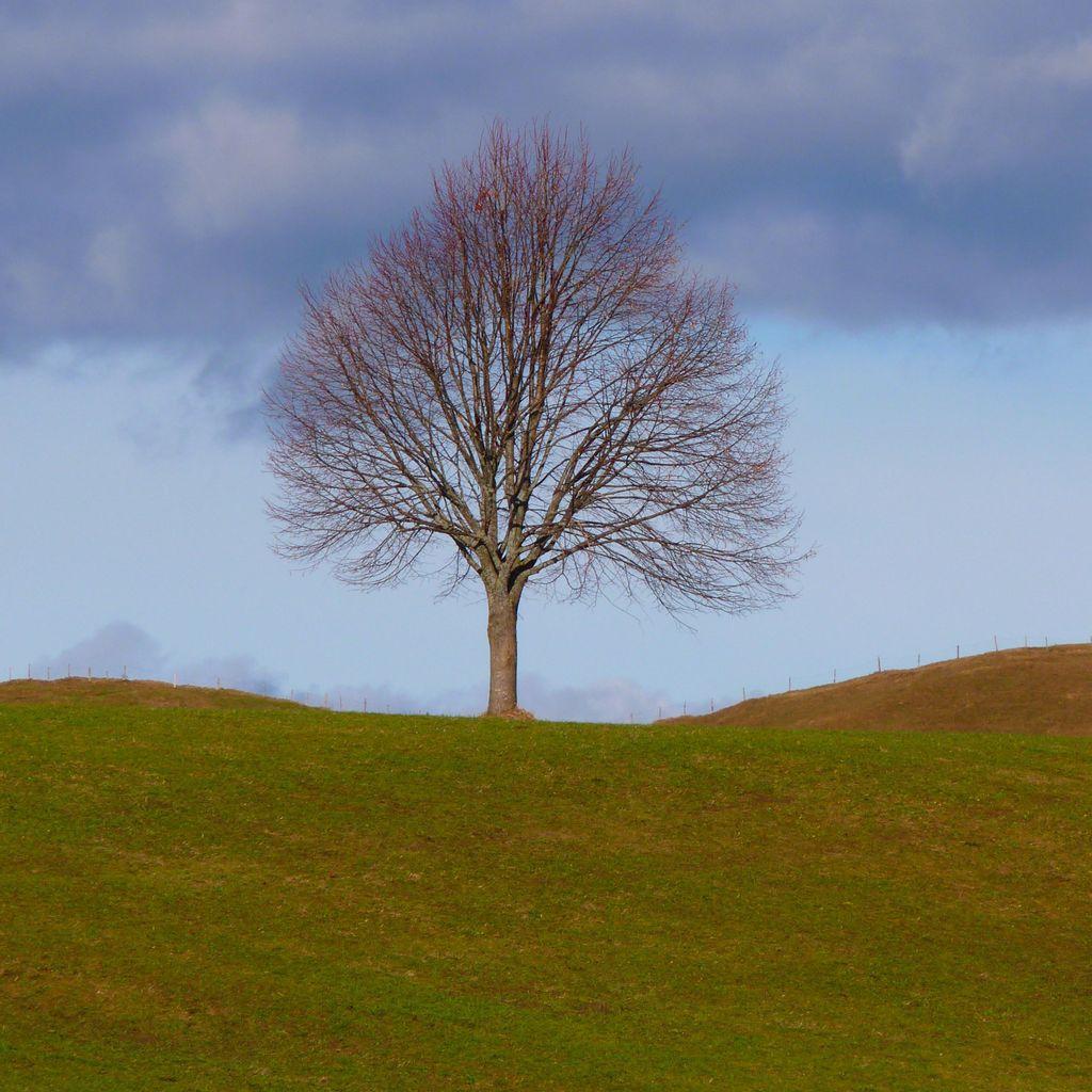 McRae's Tree Service