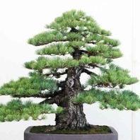 Chop Chop Tree Care