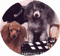 Avatar for Pampered Pooch Dog Boarding and Daycare