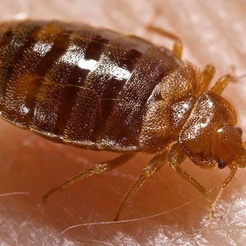 Oklahoma City is ranked 9th in the nation for highest bed bug infestations- that is a lot of bed bugs! We are the top rated bed bug exterminators in the metro- with our unique and guaranteed treatments, we always get the job done right... the first time.