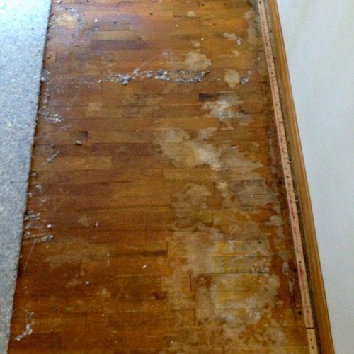 Cat urine & dog  urine stains on hardwood flooring found under carpet.