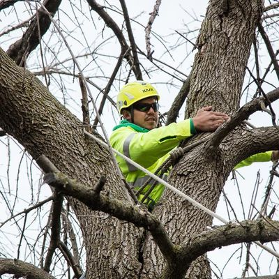 Avatar for Precise Tree Care, Inc. Frankfort, IL Thumbtack