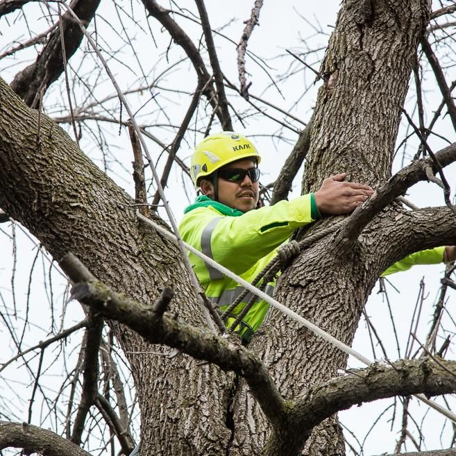 Precise Tree Care, Inc.