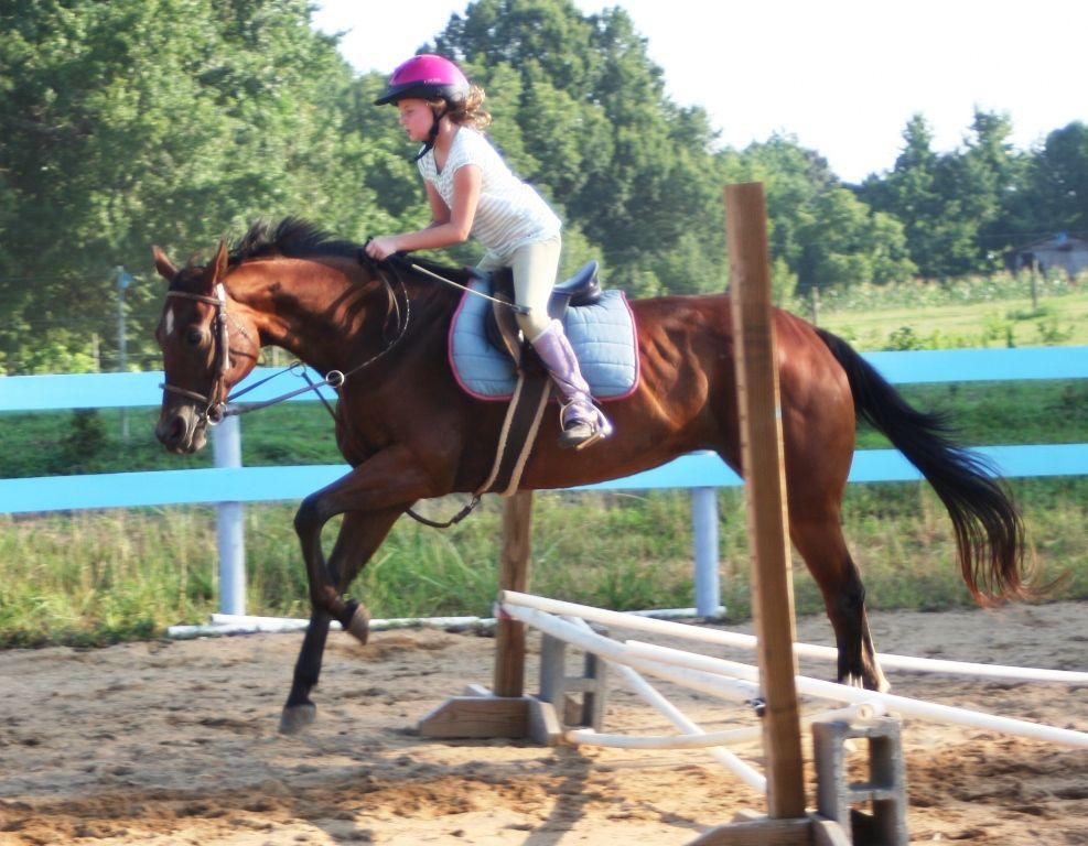 Equine Kingdom Riding Academy
