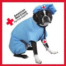 Pet First-Aid & CPR Certified!