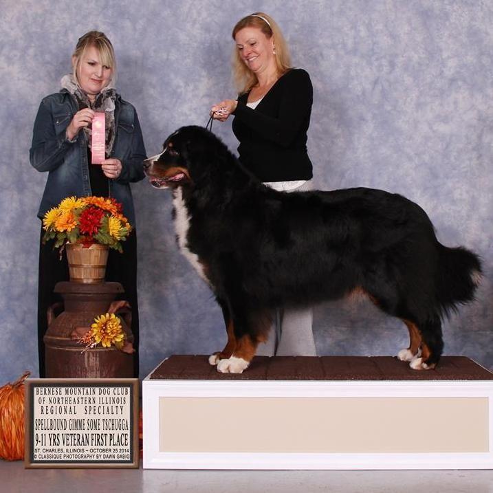 Spellbound Dog Training