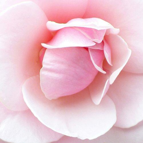 Macro Floral Image