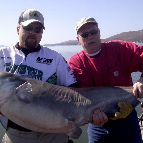 74 Pound Blue Cat
