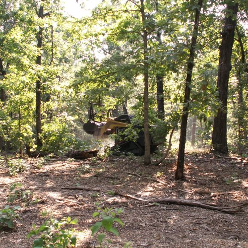 clearing residential lot of scrub while leaving the keeper trees unharmed.