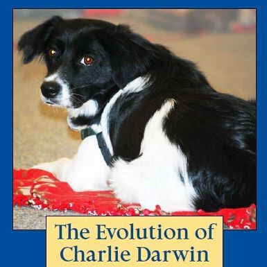 Check out Beth's book at http://www.TheEvolutionofCharlieDarwin.com