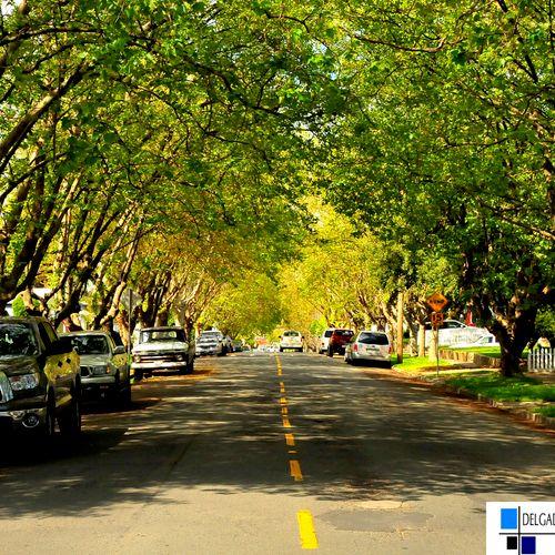 Vallejo tree-lined street