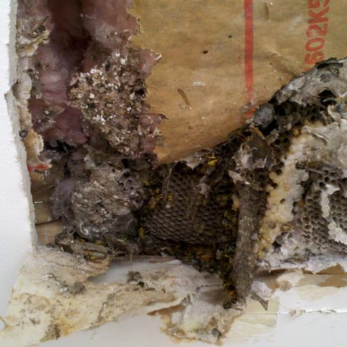 Bee hive in a bathroom ceiling