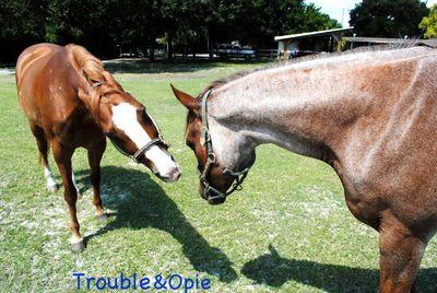 Avatar for Saddle Up Riding Club, Inc. Pinellas Park, FL Thumbtack