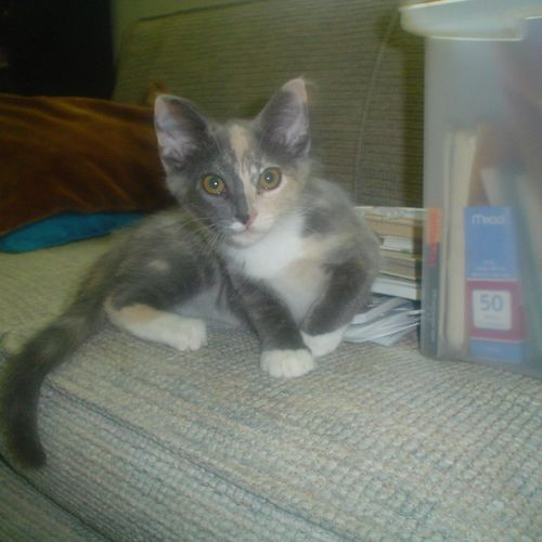 Karma just needed some attention and play time a couple of times a day. Food fresh water and a clean litter box too!