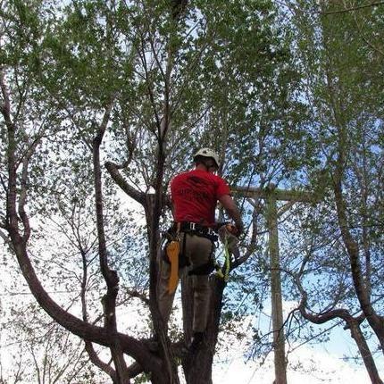 Survival Tree Service