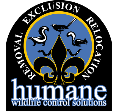 Avatar for Humane Wildlife Control Solutions