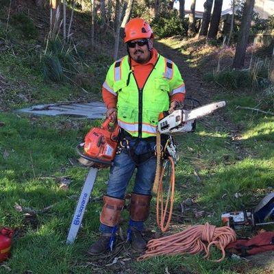 Avatar for Avalos Tree Service San Jose, CA Thumbtack