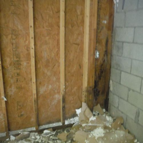 Before - Black mold growing on foundation walls in crawl space