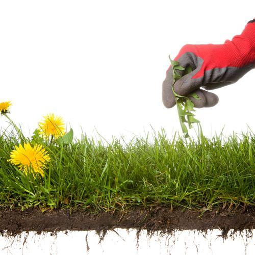 Let Us Take Care of Those Pesky Weeds