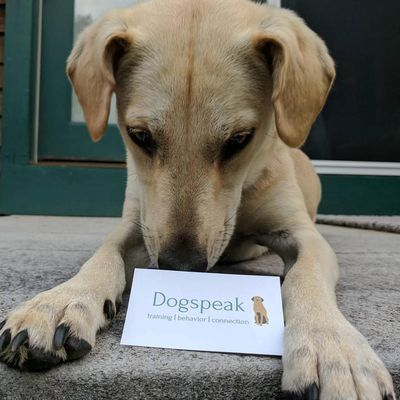 Avatar for Dogspeak North Ferrisburgh, VT Thumbtack
