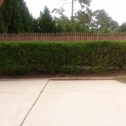 Trimmed this hedge row