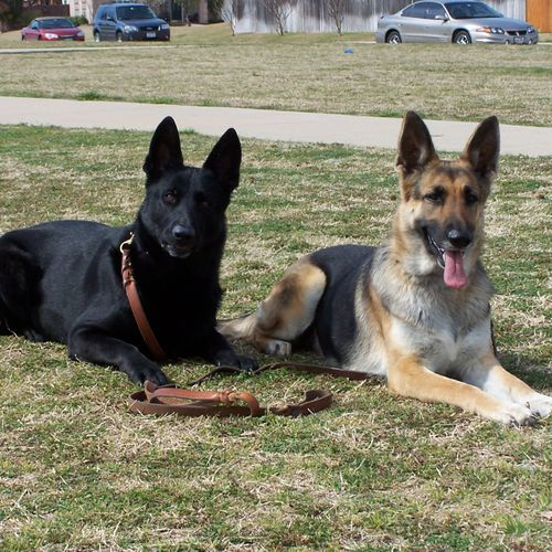 """""""Shadow"""" & """"Illa"""" - past working dogs"""