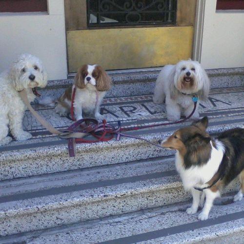 Auggie & Masha & Beau & Lady Alamo Square Neighborhood (by Lady's house)